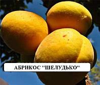 Саженцы плодовых Абрикос Шелудько