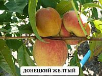 Саженцы плодовых Персик Донецкий