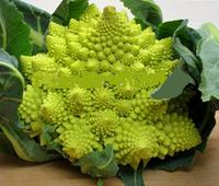 Вкуснейшие брокколи 1 лот 10 семян