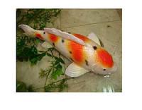 Рыбка для сада