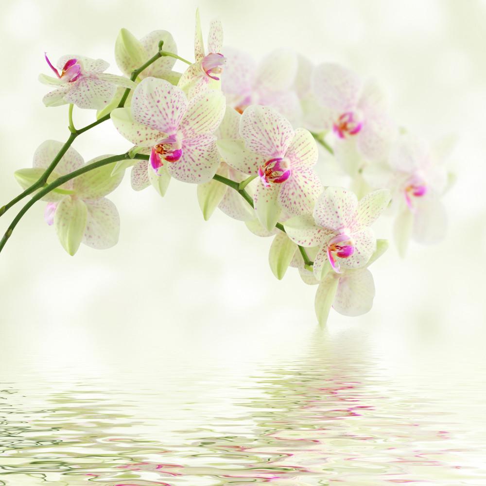 фотообои орхидеи на воде: