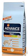 Корм для собак крупных пород Advance Dog Maxi Adult