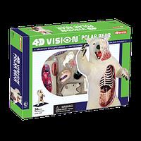 Объемная анатомическая модель 4D Master Белый медведь