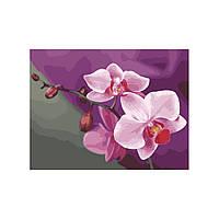 Картина по номерам Роспись на холсте Розовые орхидеи KH1081 40*50 см