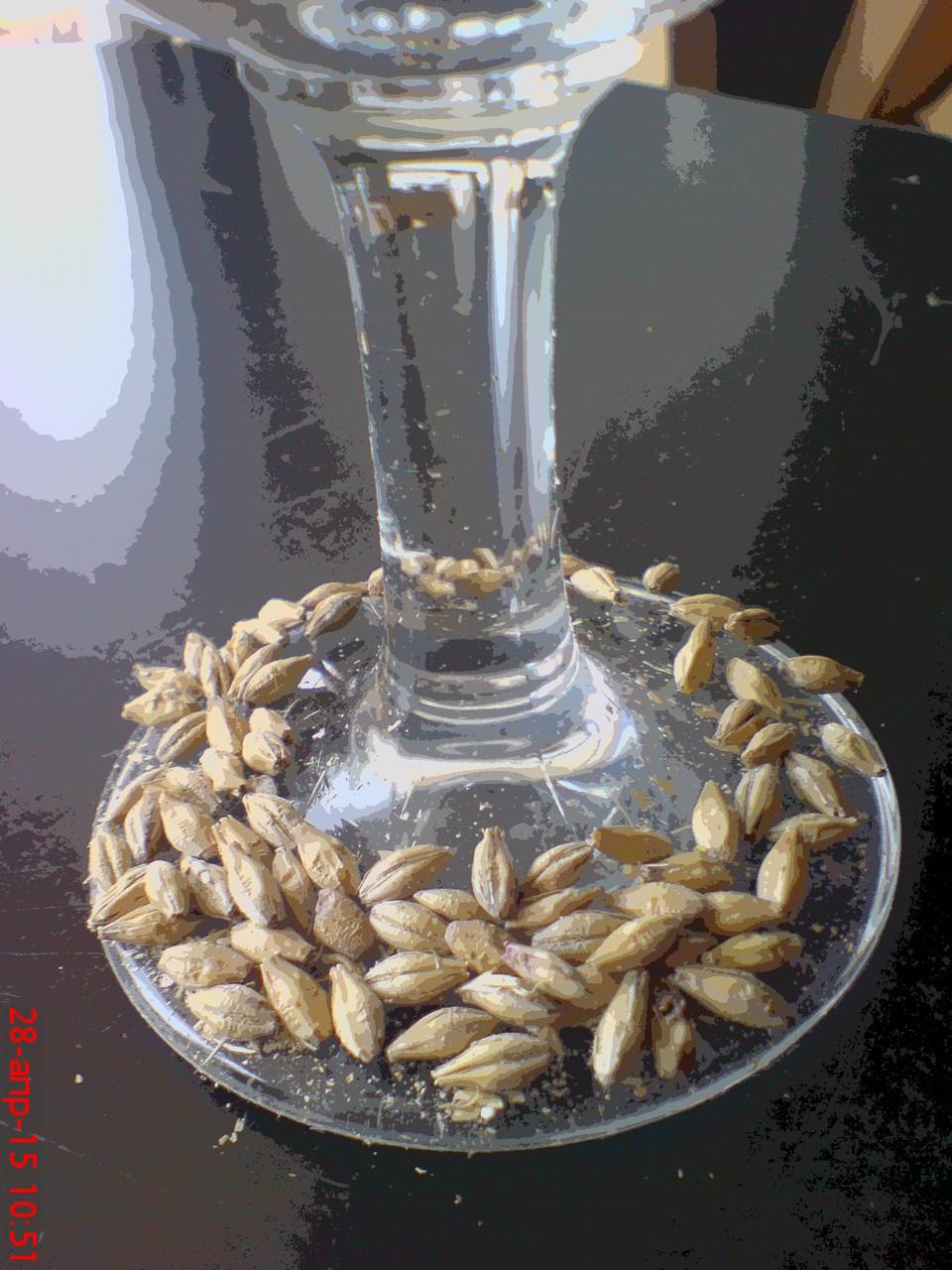 Виски в домашних условиях из ячменя