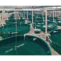 УЗВ на 10т рыбы в год
