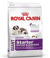 Royal Canin GIANT STARTER - первый твердый корм для щенков гигантских пород 15кг.