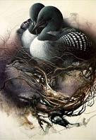 Новый 3d Diy алмаз вышивка птичьего гнезда изящные стране чудес фото современный стиль укр