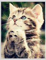 Сделай сам алмаз живопись 3D квадратный алмаз вышивка животные милый кот рукоделие горный