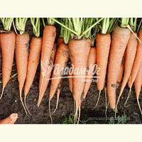Семена моркови СКАРЛА, 0, 5 кг