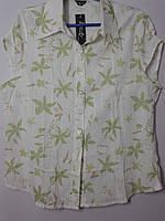 Блуза-рубашка с коротким рукавом,р.50-56.