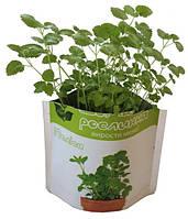"""Домашнее растение """"Мелисса"""", 0,5 л"""