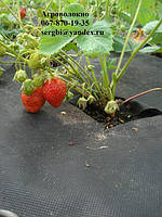 Агроволокно Агротекс 60 г/м² черное (1,6м*200м), мульчирующее от сорняков, для клубники