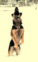 Электронный ошейник Антилай Anti Barking