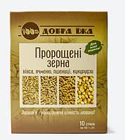 Проросшие зёрна овса, ячменя, пшеницы, кукурузы в картонной коробке