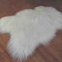Белая шкура овцы исландской породы