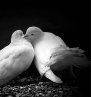 """Набор алмазной вышивки (мозаики) """"Пара голубей"""""""