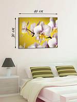 Фотографическая картина «Орхидея»