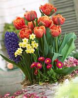 Луковицы весенних цветов