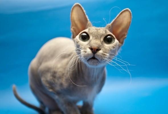 Витамины Фитомины Для шерсти 100 таблеток для кошек