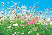 Фотообои: Полевые цветы, 366х254 см, 8 частей