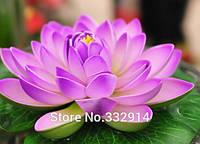Семена лотоса фиолетового