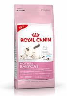 Роял Канин Бебикет 2 кг( котята до 4 месяцев, беременные и кормящие кошки)