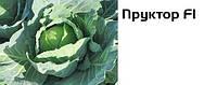 Капуста Пруктор F1 Syngenta 2500 н.