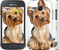 """Чехол на Samsung Galaxy Ace 3 Duos s7272 Йоркширский терьер с хвостиком """"930c-33"""""""