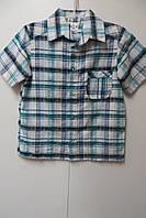 Рубашка с коротким рукавом для мальчика ТМ Алиса