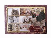 Почтовая открытка Кошки (Патриотические открытки)