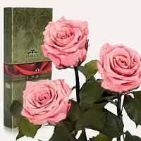 Три долгосвежие розы FLORICH РОЗОВЫЙ КВАРЦ 7 карат короткий стебель в подарочной упаковке
