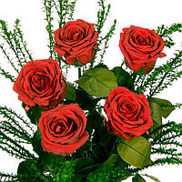 Букет из 5 долгосвежих роз FLORICH АЛЫЙ РУБИН 5 карат короткий стебель