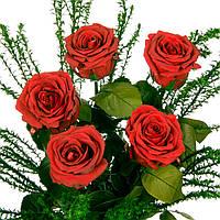 Букет из 5 долгосвежих роз FLORICH АЛЫЙ РУБИН 5 карат средний стебель