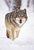 """Алмазная вышивка """"Волк и зима"""""""