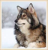 """Вышивка алмазная """"Волчий взгляд на зиму"""""""