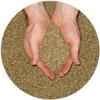 Семена люцерны, насіння люцерни, люцерна купить Киев