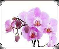 """Алмазная вышивка """"Орхидея на белом фоне"""""""