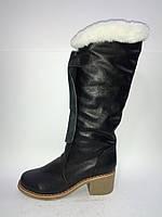 Кожаные женские зимние удобные сапоги на устойчивом каблуке 37р Tifani