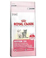 Сухой корм для котят (подходит для хорьков) Royal Canin Kitten 36 - 2 кг