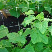 Огуречная сетка зеленая (Венгрия) 1,7 х 100м