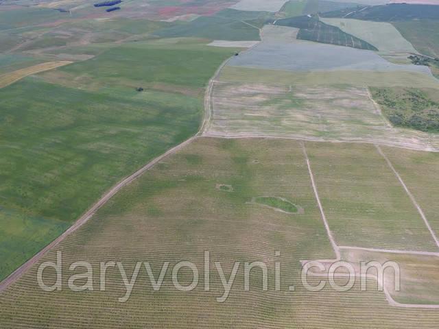 Dary Volyni fields