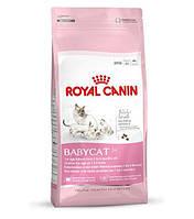 Royal Canin (Роял Канин) Сухой корм для котят Baby cat 34, 400гр (от 1до 4 мес)