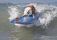 В Калифорнии прошел чемпионат по катанию на доске среди собак.