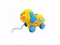 Развивающая игрушка собака - каталка WinFun 0664-01