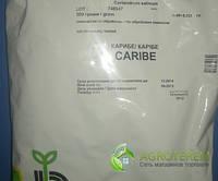 Семена кориандра (кинзы) Карибэ 500г, фото 1