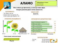 Семена подсолнуха АЛАМО