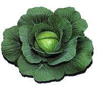 Капуста белокочанная Калорама F1 1000 семян