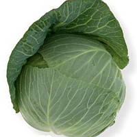 Капуста белокочанная Такома F1 1000 семян (калиброванные)