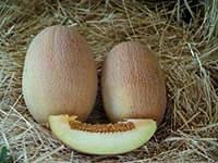 Семена дыни Оксана F1 тип Ананас 500 сем.